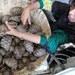 ঢাকার হযরত শাহাজালাল বিমানবন্দর থেকে পাচারের সময় বাংলাদেশ কাস্টমস কর্তৃপক্ষ ৪১৫টি কচ্ছপ আটক করে।