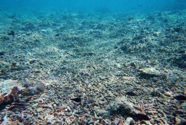 201005-coral-1000.jpg