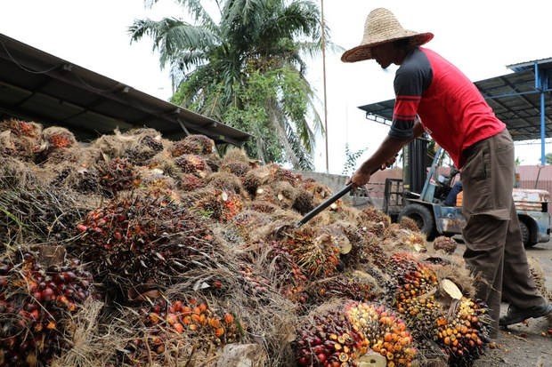Malaysia Doesn't Agree With 'Drastic' US Block of Sime Darby Palm Oil