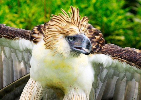 Phil Eagle 2.jpg