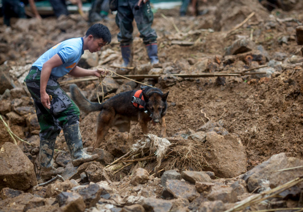 A police officer and his dog search for trapped miners following a landslide caused by Typhoon Mangkhut, Sept. 17, 2018. (Luis Liwanag/BenarNews)
