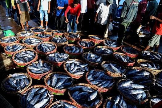 Ikan dalam keranjang-keranjang untuk dijual terlihat di pelabuhan perikanan di Banda Aceh, Indonesia, 15 Juli 2021. [AFP]
