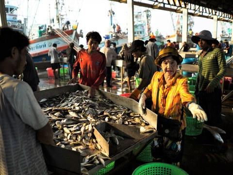 แรงงานข้ามชาติคัดแยกปลาและอาหารทะเล หลังจากขนถ่ายลงจากเรือประมง ที่ท่าเรือ ในจังหวัดสมุทรสาคร วันที่ 22 มกราคม 2561